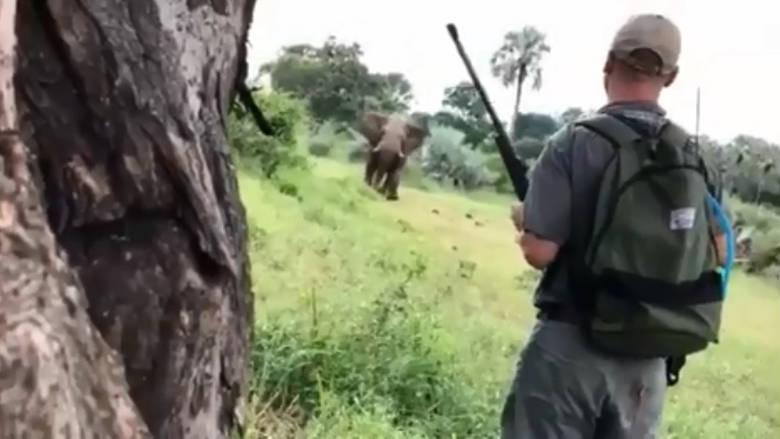 Θαρραλέος ξεναγός σώζει ζευγάρι από επίθεση ελέφαντα με μία… κίνηση