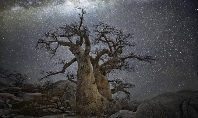 Μυστήριο με τον ξαφνικό θάνατο υπέργηρων δέντρων από την εποχή των Αρχαίων Ελλήνων