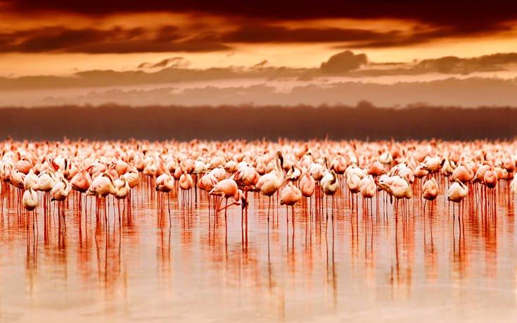 Μια ροζ λίμνη στην Κένυα