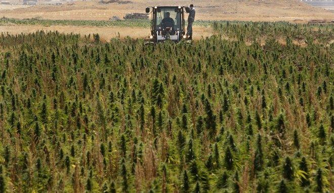Λιβανος: Η κλιματική αλλαγή οδηγεί τους αγρότες στην κάνναβη