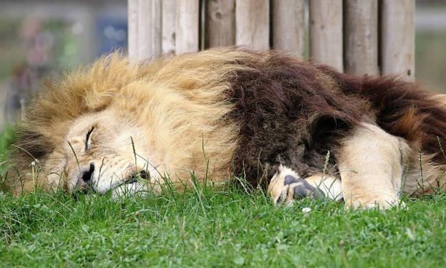 Οργή για τον κυνηγό που σκότωσε δεκάδες άγρια ζώα στην Αφρική για να βγάλει selfie