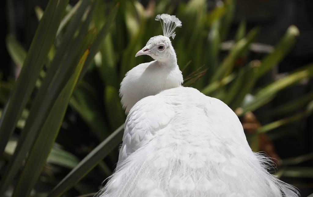 Το εντυπωσιακό πάρκο πτηνών στην Αφρική!