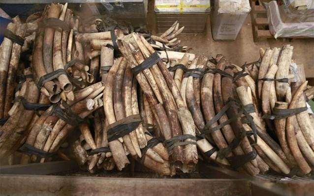 Διχάζει Αφρική – Ευρώπη ο έλεγχος του εμπορίου ελεφαντόδοντου