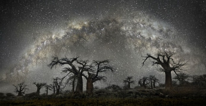Τα γηραιότερα δέντρα του κόσμου τη νύχτα