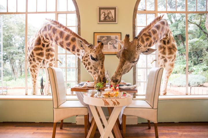 Εκπληκτικά ξενοδοχεία – «Giraffe Manor, Κένυα»