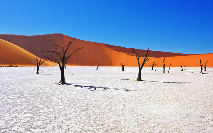Σκελετωμένοι κορμοί δέντρων ανάμεσα σε κόκκινους αμμόλοφους