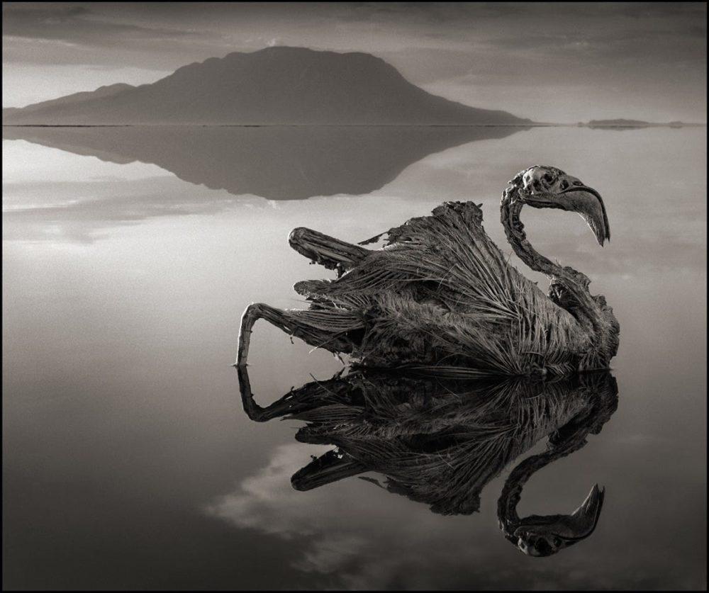 Η λίμνη Natron και τα φονικά νερά της