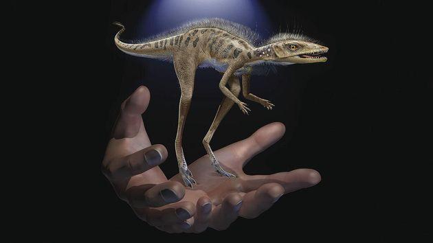 Οι «παππούδες» των δεινοσαύρων ήταν «νάνοι»
