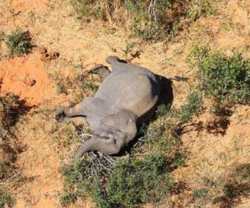 Μυστηριώδης ιός πίσω από τους θανάτους εκατοντάδων ελεφάντων στην Μποτσουάνα; Φόβοι μήπως μεταπηδήσει στους ανθρώπους