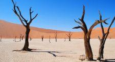Deadvlei: Το απολιθωμένο δάσος της Ναμίμπια