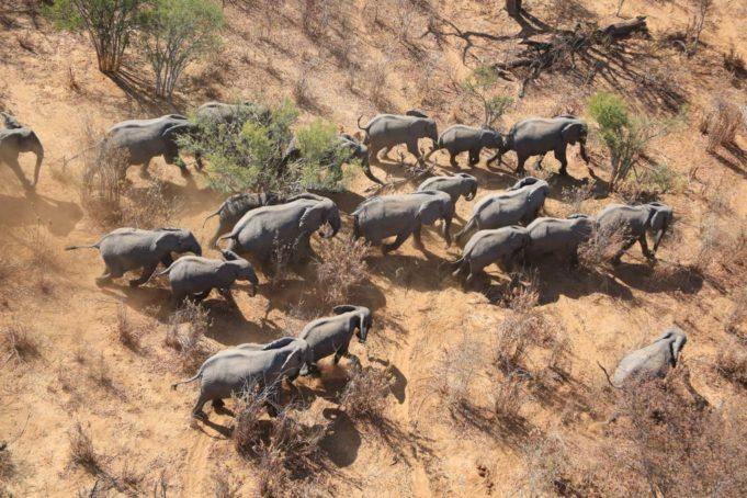 Μποτσουάνα: Απάντηση στον μυστηριώδη θάνατο των 330 ελεφάντων
