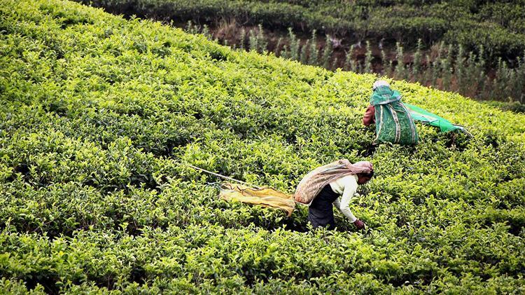 Η ΕΕ και η Αφρική εντείνουν τη συνεργασία στον τομέα των γεωργικών επιχειρήσεων