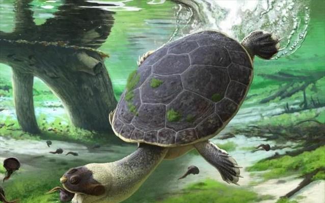 Ανακαλύφθηκε αρχαία… βατραχοχελώνα