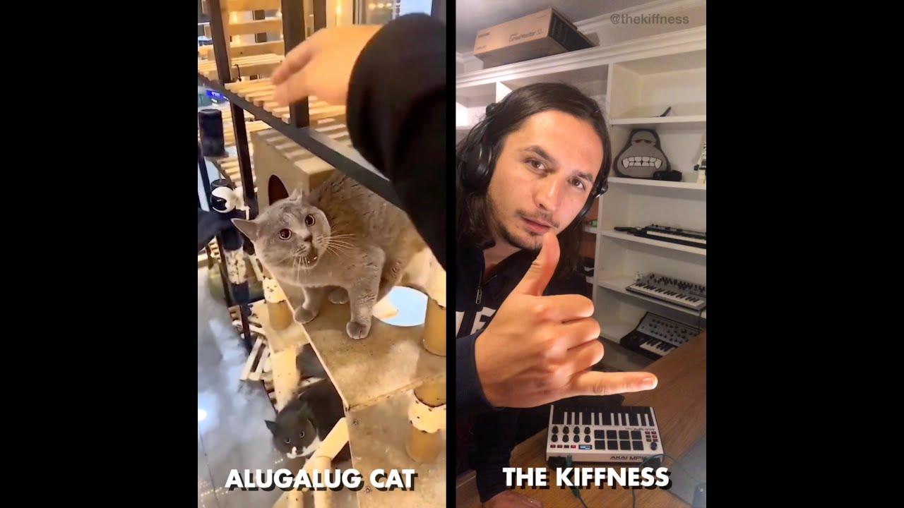 Μια γάτα που τζαμάρει στη Νότια Αφρική «ρίχνει» το Ίντερνετ