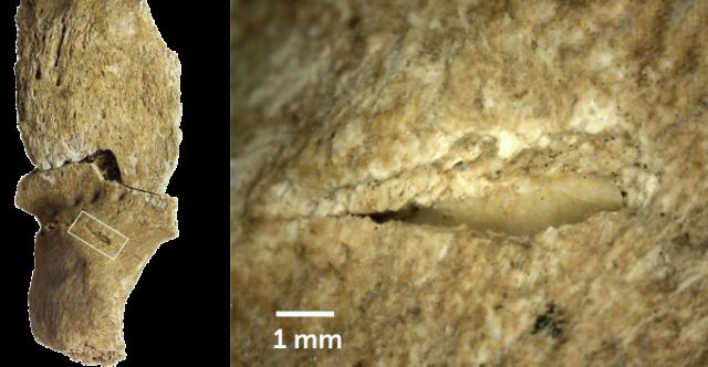 13.400 χρόνια πριν οι κυνηγοί-συλλέκτες ξεκίνησαν επιδρομές