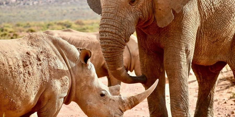 Ναμίμπια: Η λαθροθηρία ρινόκερων και ελεφάντων συνεχίζει να παρακμάζει